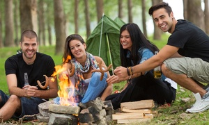 Jungle Kidz Academy: Five-Day Educational Camp at Jungle Kidz Academy (22% Off)