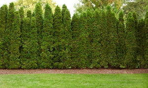 Tiffany Lawn & Garden: $16 for $30 Worth of Bulk Landscaping Products at Tiffany Lawn & Garden