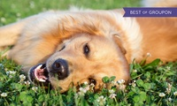 All About Dogs: Entry For Two or Four at Newark Showground (Up to 55% Off)