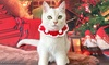 Pet Christmas Knitted Collar
