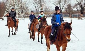 Stajnia Pociecha: Zimowy weekend w siodle dla 1 osoby za 139,99 zł i więcej opcji w Stajni Pociecha (do -44%)