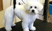 Full Dog Grooming for Breed of Choice at Mucki Pups
