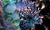 Palais De La Porte Dorée - Paris: Entrées pour adultes et enfants à l'aquarium tropical du Palais de la Porte Dorée dès 5 €