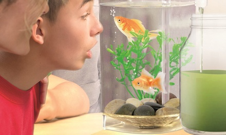 Fish Wonder Self Cleaning Aquarium Groupon
