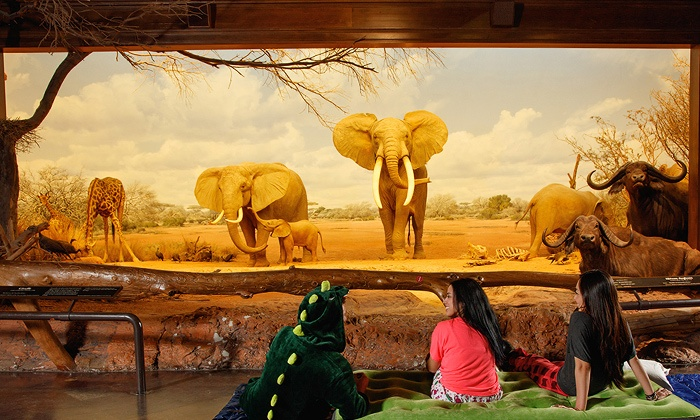 Natural History Museum Of Los Angeles County Multiple Locations Admission For One To A