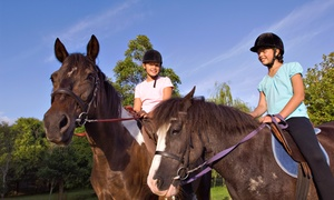 Experienced Equine Connection: Two or Four One-Hour Semiprivate Horseback-Riding Lessons at Experienced Equine Connection (Up to 51% Off)