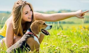 E-Careers: Corso online di comunicazione con gli animali con la scuola E-Careers (sconto di 91%)
