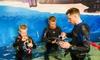 Snorkelling with Aquarium Passes