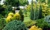 Evergreen Hardy Dwarf Conifers