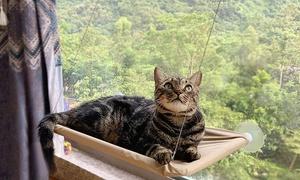 Hamac ventouses pour fenêtre chat
