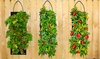 Organic Hanging Vegetable Grow Kits (1-, 2-, or 4-Pack)