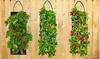 Pre-Order: Organic Hanging Vegetable Grow Kits (1-, 2-, or 4-Pack)
