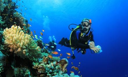 Corso di Scuba Diver o di apnea per apneisti e pescatori subacquei