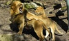 Buffalo Zoo – Up to 54% Off Visit