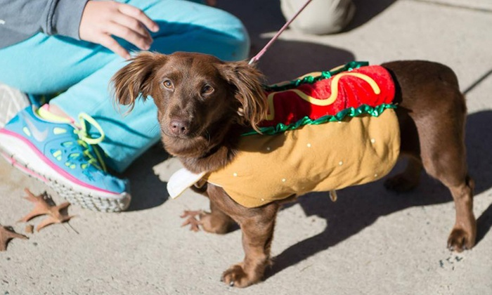 Home at Last Dog Rescue - Parkside Place Park: Howloween 5K, Walk, and Fall Fest from Home at Last Dog Rescue (Up to 43% Off). Three Options Available.