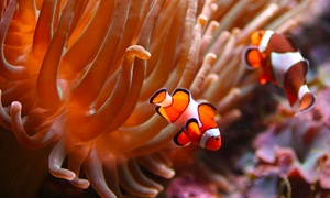 L'Aquarium de Bruxelles: Visite éducative ! 2, 4 ou 6 entrées pour l'Aquarium de Bruxelles dès 9€