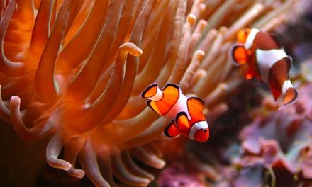 Visite éducative ! 2, 4 ou 6 entrées pour l'Aquarium de Bruxelles dès 9€