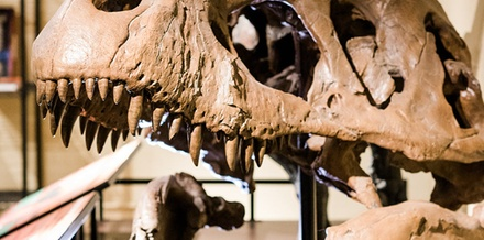 Admission for One, Two, or Four at North Museum Of Natural History And Science (Up to 48% Off)