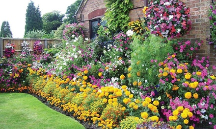 Summer Bedding Collection – 24, 48, 72 or 144 Plants with Optional Hanging Baskets