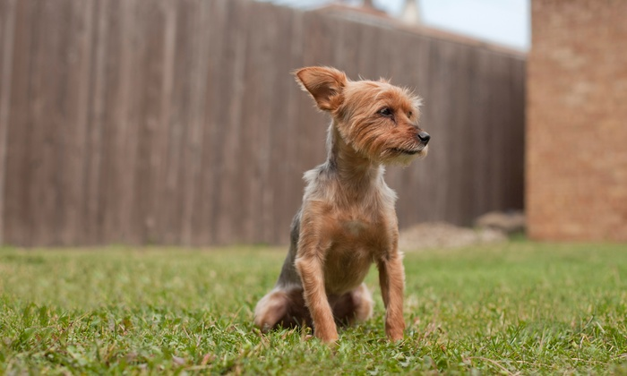 Pet Potty Patrol - Tulsa: $29 for One Month of Dog-Waste Removal for Up to Two Dogs from Pet Potty Patrol ($65 Value)