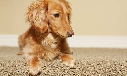 $90 for $237 Worth of Rug and Carpet Cleaning  TruRenew Clean