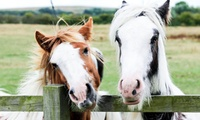Essex Horse and Pony Protection Society: Family Entry With Refreshments (up to 33% off)