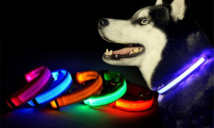 LED Dog Collar in Choice of Colour and Size From £2.99