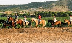 Caballos de Simancas: Paseo a caballo para 2 o 4 personas por el Pinar de Simancas desde 29,90 € en Caballos de Simancas