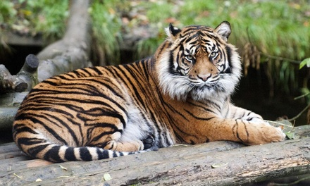 January and February Child, Adult or Family Ticket to Dudley Zoological Gardens, Booking Required (Up to 57% Off)