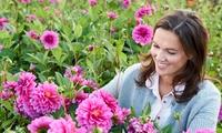 Bon de valeur de 20€ sur tout l'assortiment de la jardinerie en ligne Bakker.com