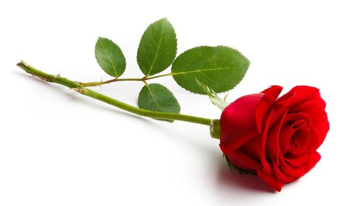 Dozen long stem roses elite floral orlando groupon for Blue long stem roses