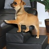 Leatherette Pet Steps (2-Pack)