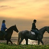 Up to 71% Off Horse-Riding Lesson
