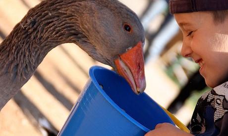 Entrada a Granja Natura para 2, 4, 6 u 8 personas con visita guiada y actividades de agua desde 12,95 €
