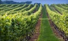 Pindar Vineyards - Northfork: VIP Wine Tasting for Two or Four with Cheese, Crackers, and Souvenir Glasses at Pindar Vineyards (Up to 55% Off)