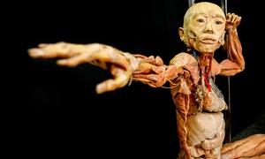 Art BHZ: Exposição Human Bodies - Maravilhas do Corpo Humano - Shopping Catuaí: 1 ingresso