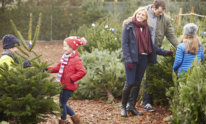 50% Off from Mr. Jingles Christmas Trees - Natural Christmas Trees - Mr. Jingles Christmas Trees Groupon
