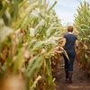 33% Off Corn Maze and Fall Festival