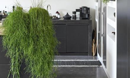Set de plantas Rhipsalis