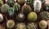 Collection de plantes de cactus