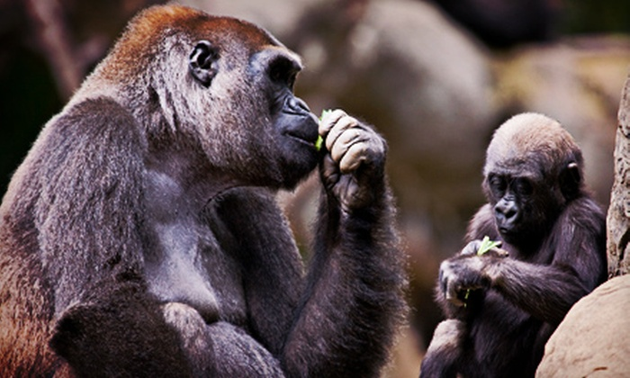 Zoo Atlanta - Grant Park: $20 for a Visit to Zoo Atlanta for Two (Up to $43.98 Value)