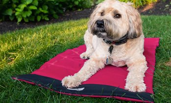 Eddie Bauer Roll Up Travel Pet and Dog Bed