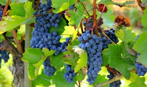 Clear Creek Vineyard & Winery: Wine-Grape Stomp for One, Two, or Four on Saturday, October 24, at Clear Creek Vineyard & Winery (Up to 54% Off)