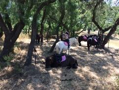 Lîle Aux Poneys: Balade à poney de 30 minutes, pour 1 ou 2 personnes, dès 8 € à Lîle Aux Poneys