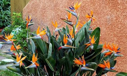 Set van 2, 4 of 6 paradijsvogelplanten