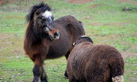 Visita al zoo de fauna autóctona y al parque multiaventuras para 2, 4 o 6 personas (hasta 59% de descuento)