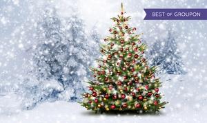 Mon Eden: Votre sapin de Noël Nordmann livré directement chez vous, dès 29,90 € sur le site Mon Eden, frais de port offert