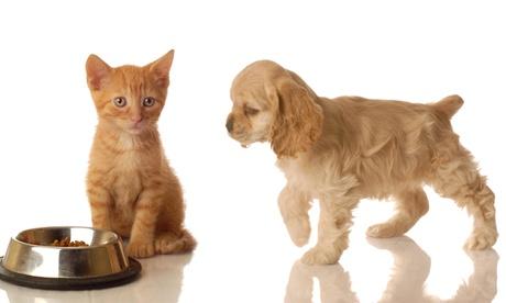 Para cachorros perro o gato con primera consulta, desparasitación, vacuna y canastilla desde 16,95 € en Vida Animal