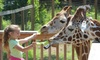 Up to 47% Off Admission to Elmwood Park Zoo