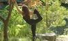 The Yoga Garden - Franklin: $29 for $84 Worth of Services — The Yoga Garden